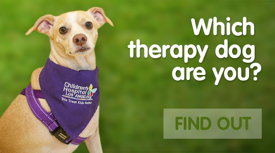 Which therapy dog are you?